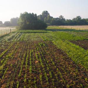 Ekologiczne warzywa i owoce z pola Zielone Serce
